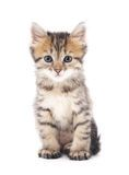 Exotic Shorthair Kitten, 4 Months Old, Sitting - Download From Over 44 Million High Quality Stock Photos, Images, Vectors. Sign up for FREE today. Image: 17598207