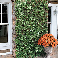 Expandable faux ivy trellis; for those with no green thumb!