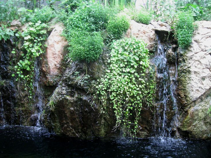 Ecological pool  #eco_pool #nature #natural_pool