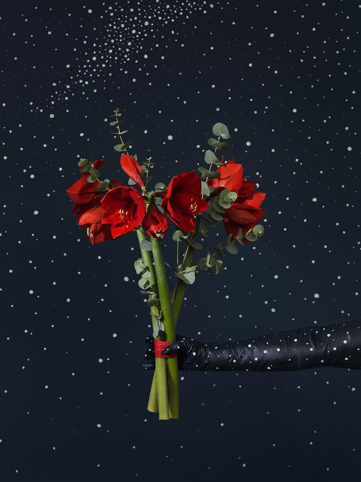 Decemberbuketten är en julig bukett med ståtlig amaryllis och eukalyptus