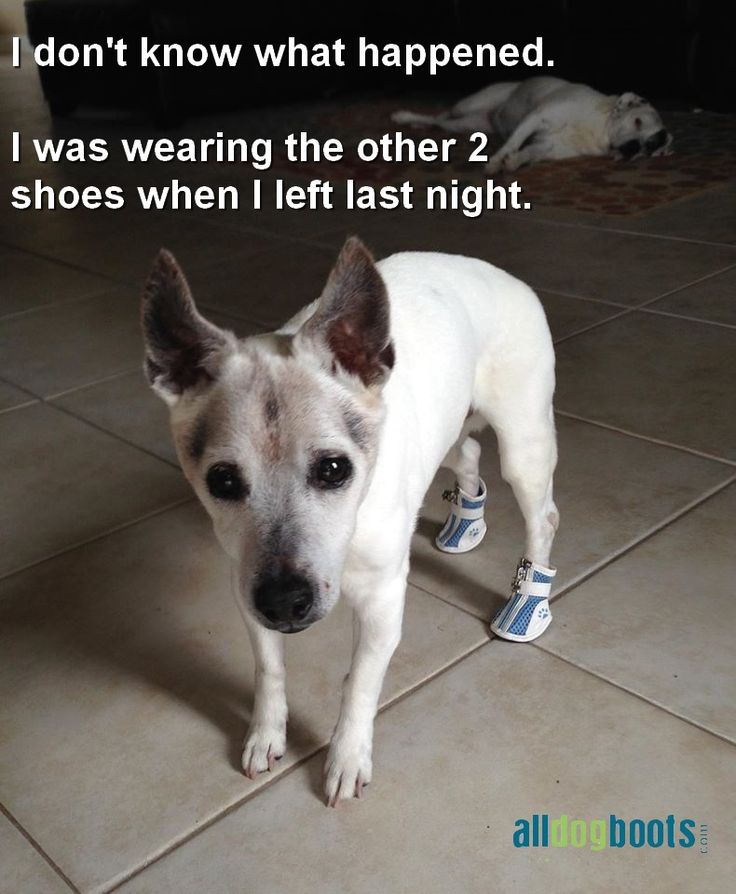 77 Best Dogs Wearing Boots & Shoes Images On Pinterest