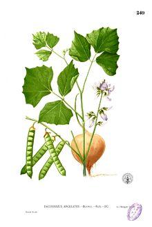 Jicama Slaw: 1 Granny Smith peeled & cubed, 1 Jicama root peeled & cubed, 1T EVOO, 2-3T Rice Vinegar, Fresh Cilantro, Red Pepper Flakes & Fresh Lime Juice to Taste