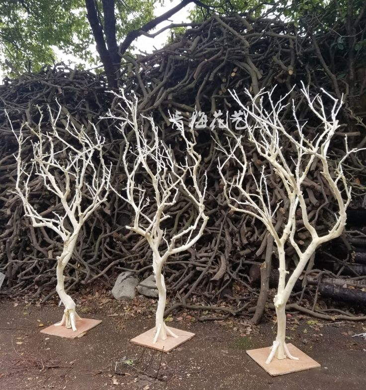 Dry Branches Dry Branches Tree Dead Trees Decorate White