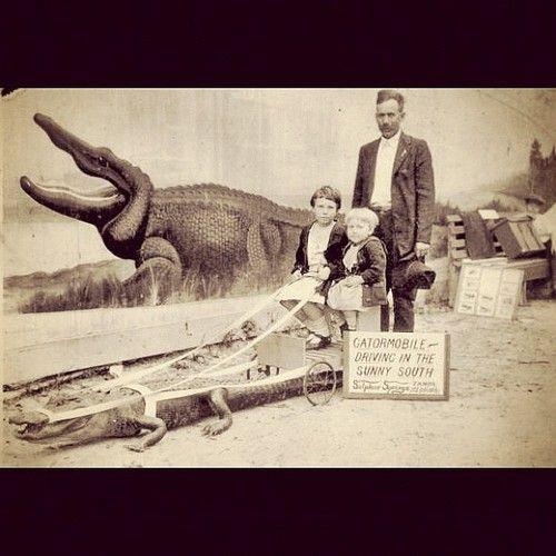 Vintage Florida - kids ride gator!