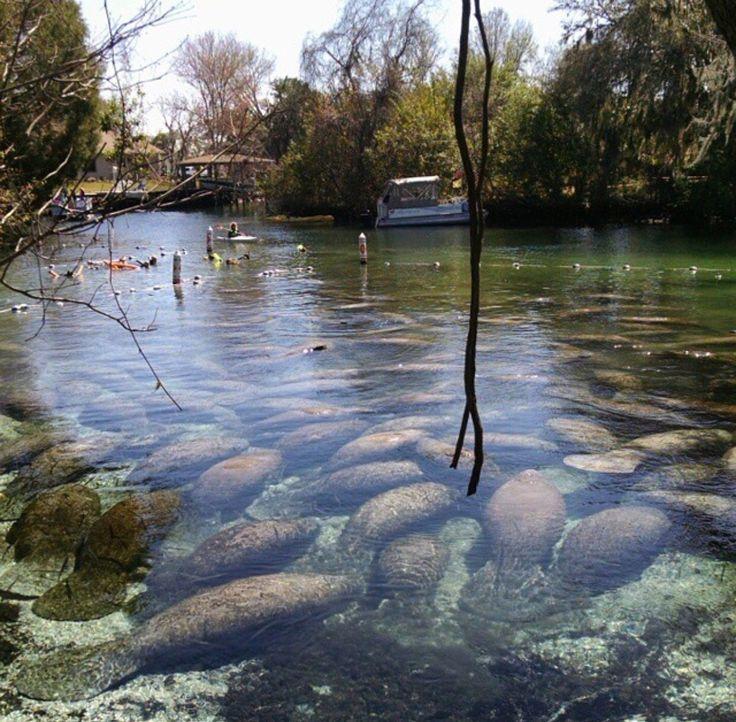 Crystal River Fl Kayak Tours