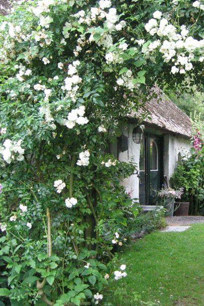 de brinkhof rozen
