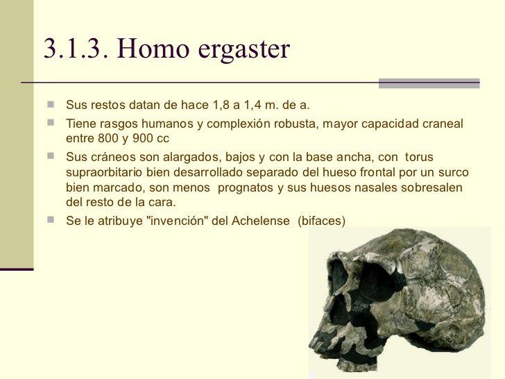 Deacripción del cráneo del Homo ergaster.