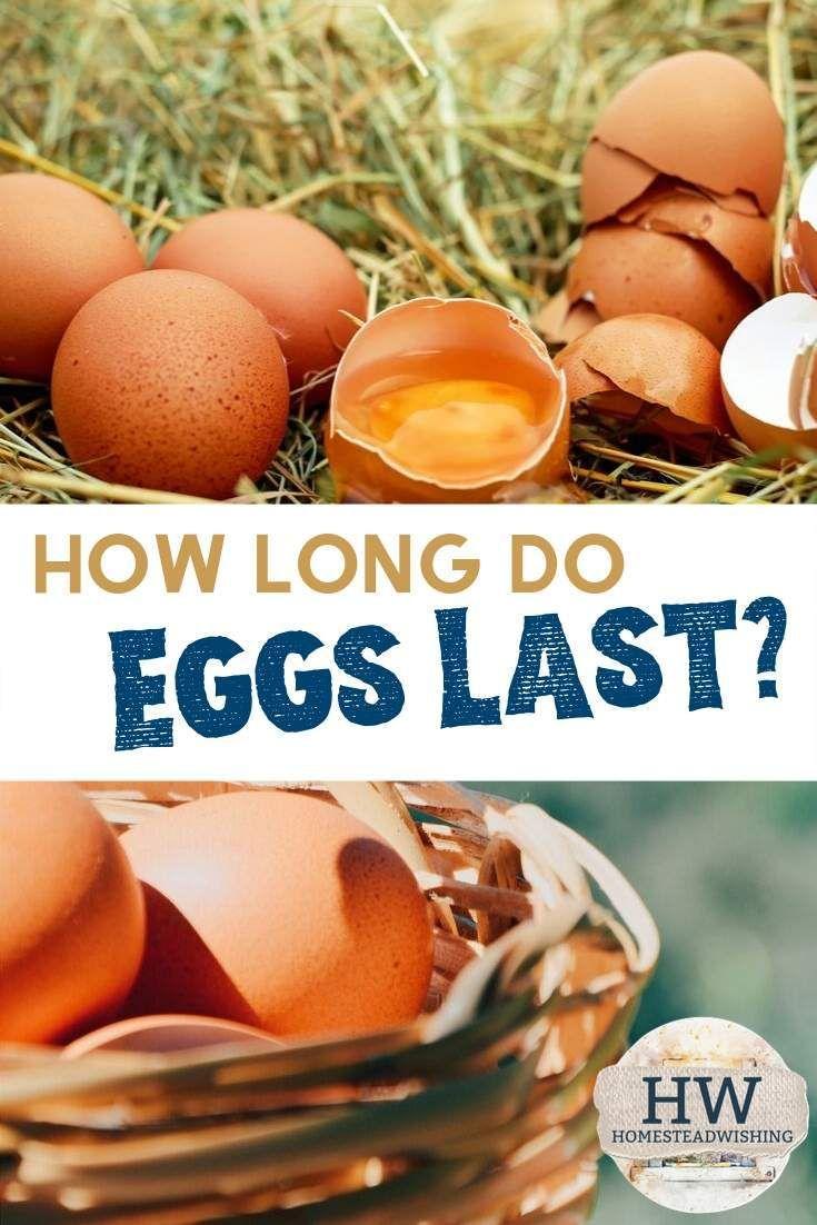 Do Eggs Go Bad Yep They Sure Do Chicken And Duck Eggs Have A Pretty Good Shelf Life But Really How Long Do Eggs Last Egg Farm Fresh Eggs Eggs Rotten