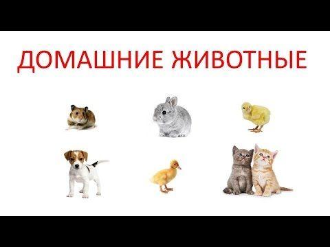 """Как говорят домашние животные? Развивающее видео для малышей """"Учим домашних животных. Звуки домашних животных"""" поможет малышам не только познакомится с основными видами домашних животных по методике Домана, но и услышать какие звуки они издают. В видео малыши увидят таких животных, как: кошка, котёнок, собака, щенок, курица, петух, цыплёнок, корова, телёнок, утка, утёнок, гусь, индюк, мышь, хомяк, кролик, морская свинка, осёл, овца, коза, лошадь, свинья, попугай."""
