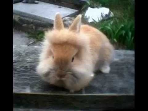 najdłuższy film o królikach