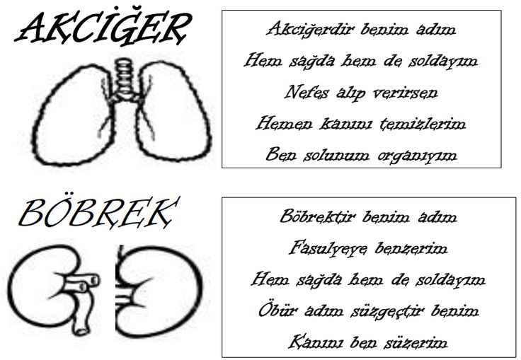 2. Sınıf Hayat Bilgisi İç Organlarımız 2. Sınıf Hayat Bilgisi İç Organlarımız 2. Sınıf Hayat Bilgisi Duyu Organlarımız 2. Sınıf Hayat Bilgisi Organlarımız Ve Görevleri 2. Sınıf Hayat Bilgisi Organlarımız Ve Görevleri
