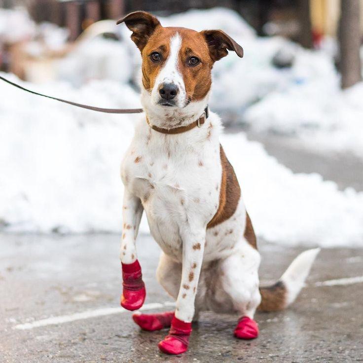 Dog Rescue Central Ny