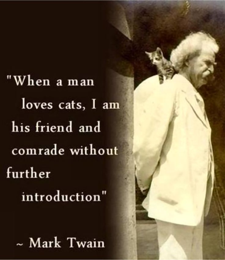 Never Trust A Man Who Doesn T Like Cats Quote