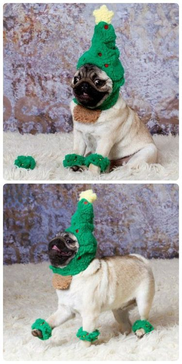 Pug dressed in its Christmas costume!