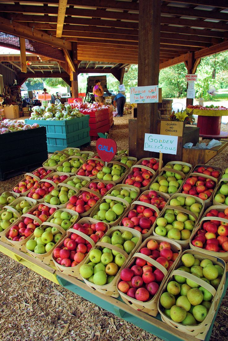 Apple orchard near Hendersonville, North Carolina USA