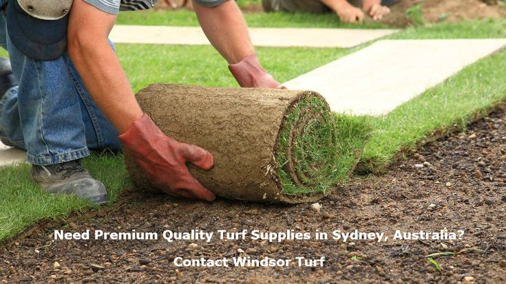 If you in search of high quality turf supplies in Sydney, then Windsor Turf has plenty of options for you at affordable prices. We are #Windsor #Turf – we are authorised and certified turf supplier in Sydney with more than 40 years of industry experience.