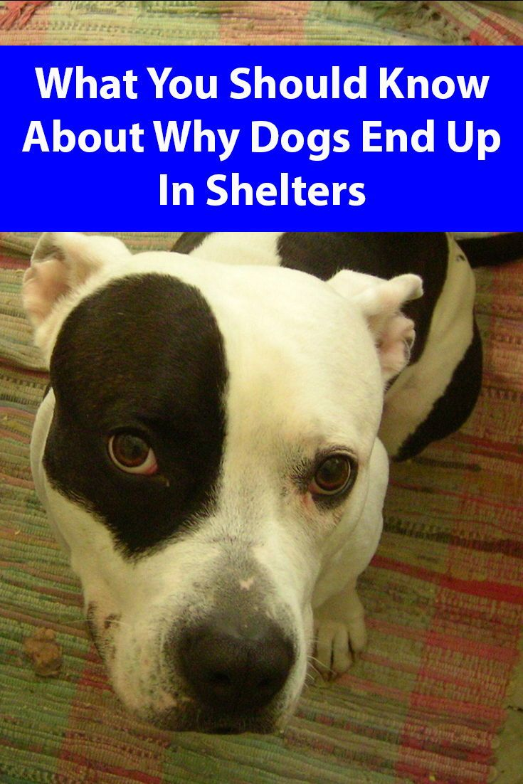How Dogs End Up In Shelters Dogs Dog Care Dog Spay