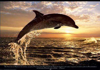 Fedezd fel és oszd meg a legszebb képeket a világ minden tájáról!