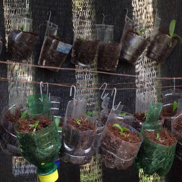Jangan langsung buang botol plastik bekasmu. Botol plastik ini bisa dimanfaatkan untuk menanam salah satunya tanaman anggrek seperti yang dilakukan oleh Indmira ini.  #IndmiraPic #hydroponics #aquaponics #aqua #organic #urbanfarming #vertikultur #verticalfarming #hidroponik #hidroponikindonesia #akuaponik #planting #gogreen #saveearth #savewater #noplastic #nofilter #plants #leaf #leaves #kkn #jogjaberkebun #green #social #environment #wetland #wastetreatment #recycle by indmira