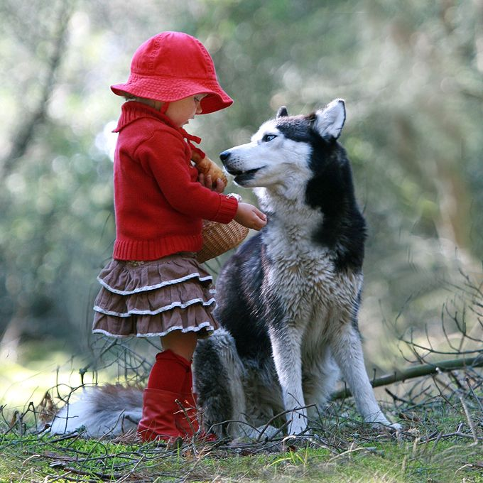 little redwood and the wolf