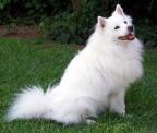 Top 12: najdroższe rasy psów