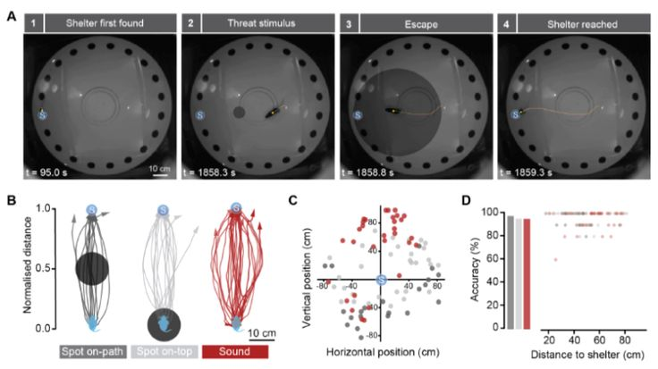 This Week In Neuroscience: Rapid spatial learning non-spatial hippocampal encoding and in vivo dendritic membrane potentials