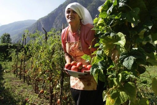 Agritourism in Greece. 1000 Colours, agrotourism Operator