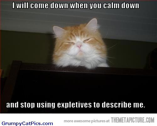 cute kitties with captions