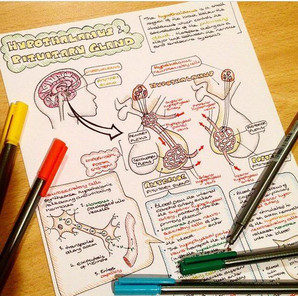 Sarah Clifford (@SCillustrations) | Medical school ...