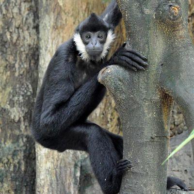 JungleWorld - Bronx Zoo
