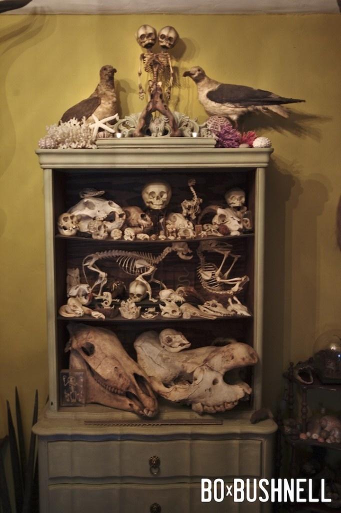 display of curios and oddities