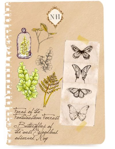 A Field Journal: Natural Historie Notebook: Drawings
