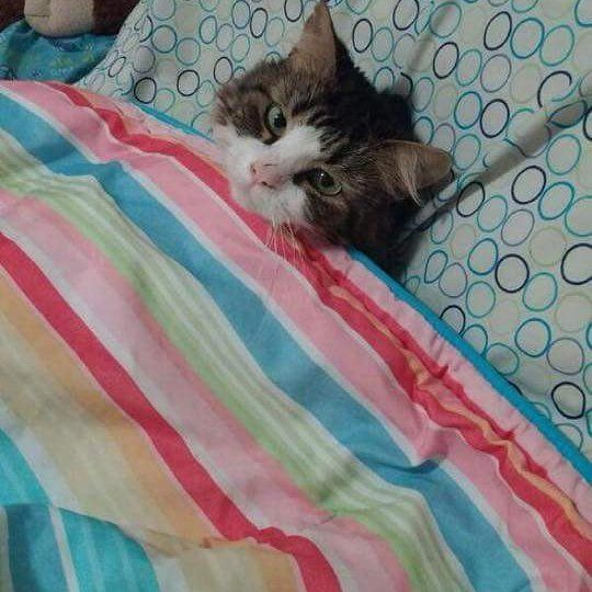 Good morning! All I wish a good day!  Follow us on: - https://goo.gl/NKk858 - Twitter: https://goo.gl/PlLXiR - Pinterest:https://goo.gl/9NIzFX - Facebook:https://goo.gl/Y7XnNU  #catoftheday#instacat#takemecamping#catsofig#catsofday#catsofinstagram#catlovers#cats#catstagram#dailycat#kitten#kittens#kitty#mycat #ilovemycat#instacat#catpic#russianminiatures#pets#petsagram#miau#catsofworld#meowbox#adorable#savecat#petstagram