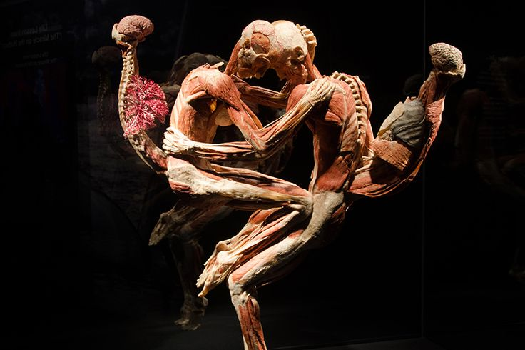 The BODY WORLDS exhibitions inspire visitors all over the world. Learn about the inner workings of the human body and the effects of healthy and unhealthy lifestyles.