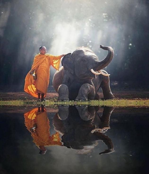 A Monk and his Elephant