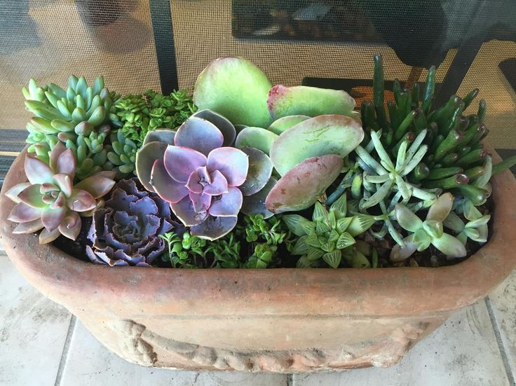 Looking for gardening project inspiration? Check out My first group by member Jacki Barycki.