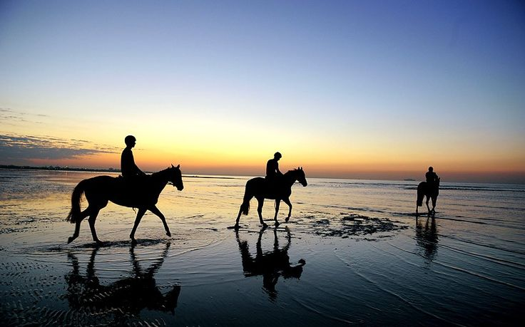 Melbourne Cup winner Fiorente (centre) walking in shallow waters during a trackwork session on Altona Beach, Melbourne