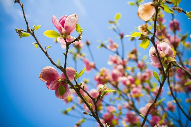 Blumen im Frühling! #Himmel #blau #Blumen #rosa #Ast #Fotografie #Frühling #farbenfroh