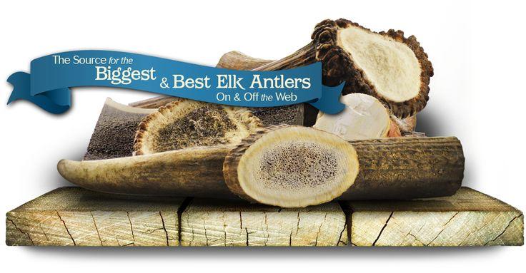 Elk Antler - Elk Antlers for Dogs - BestElkAntlers.com