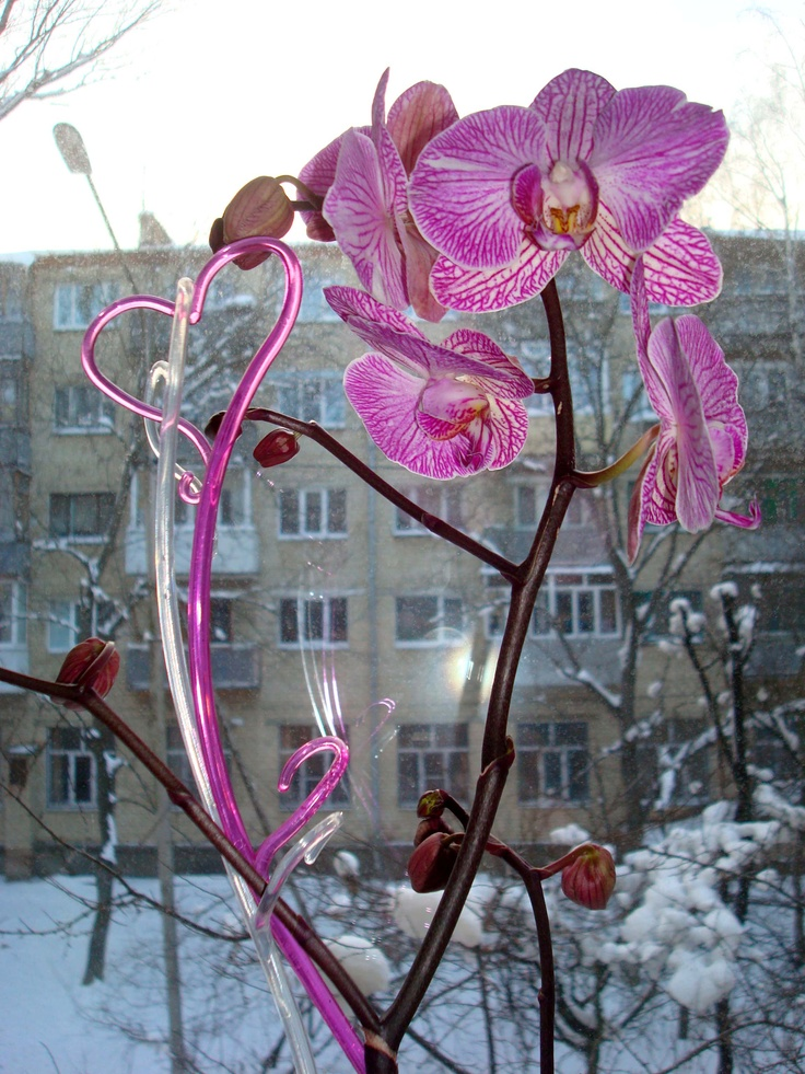 Mother's orchid
