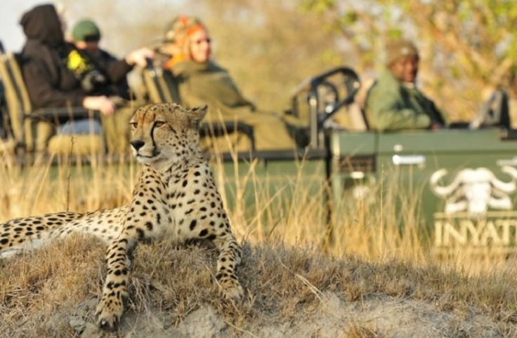 South Africa is renowned for its exceptional game reserves. From the Kruger and Greater Kruger to Madikwe and Hluhluwe, the country should be on your safari bucket list.