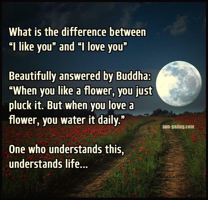14 best buddha quotes images on pinterest buddha quote dating and what is the difference between i like you and i love you beautifully answered by buddha when you like a flower you just pluck it fandeluxe Gallery