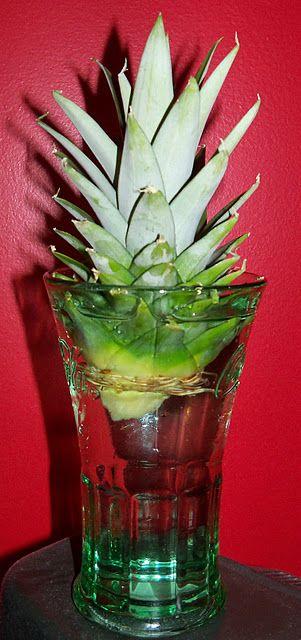How to start a pineapple plant! mettre des roches dans le fond et faire un centre de table dehors