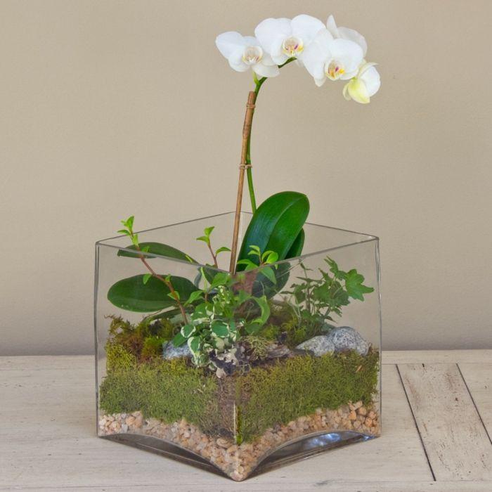 die besten 25 orchideen ideen auf pinterest. Black Bedroom Furniture Sets. Home Design Ideas