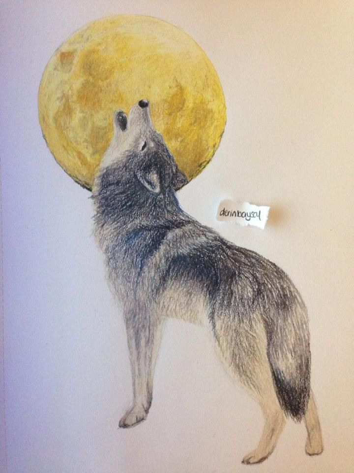 Wolf. Prismacolor Premier Colored Pencils. #wolf #drawing ...
