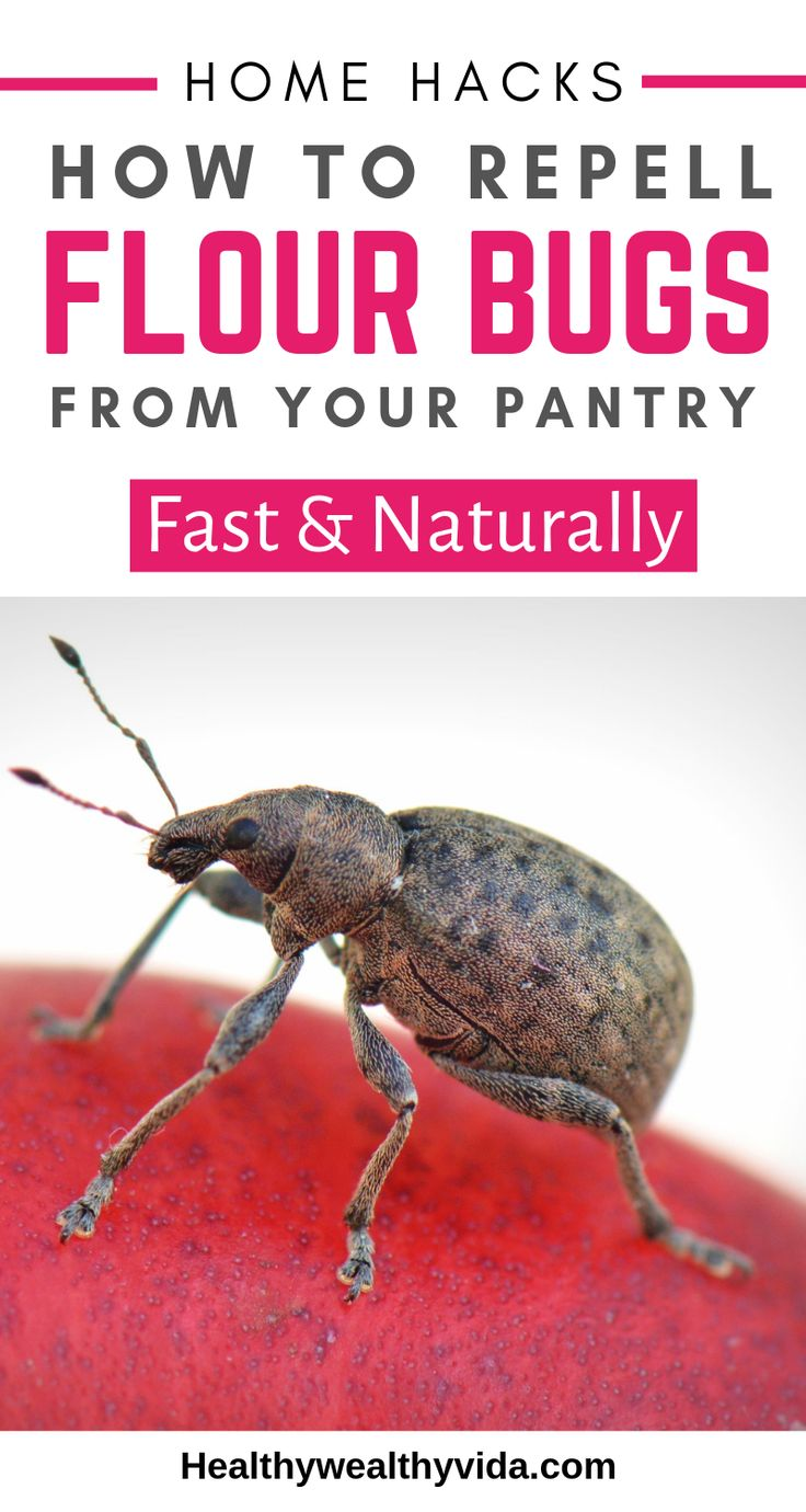 How to get rid of weevils naturally with images pantry
