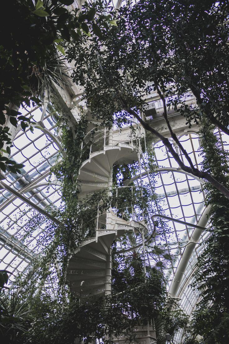 Palmenhaus, Schönbrunn, Schloss, Treppe, Palmen, Geheimtipp, Wien, Vienna, Must see, Tipps, Citytrip, Kurztrip, Insidertipp, Travelblog, Urban Jungle, corkscrew stairs, Wendeltreppe