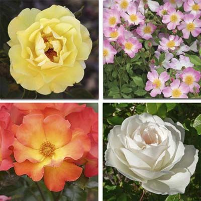 These long-lasting blooms will take you into the fall with little to no fuss