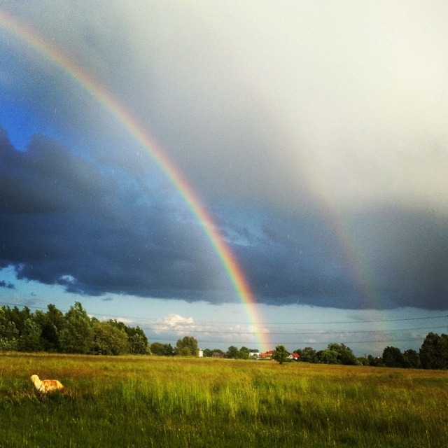 Rainbow and dog
