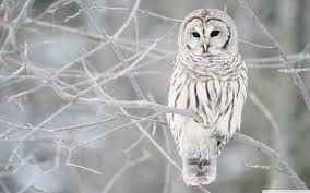 Image result for Owls